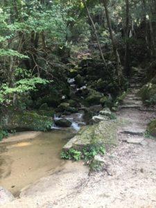 水の音が聞こえるハイキング♪